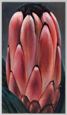Protea Erectus