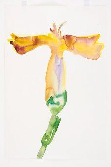 Lente (anjer geel + paars)
