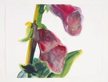Lente (foxglove I)